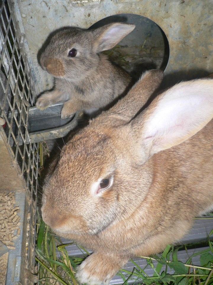 Mamma Giadina e il suo piccolo coniglietto